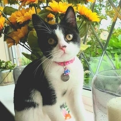MeowCo Cat of the month