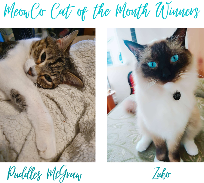 MeowCo Cat of the Month Winners (1)